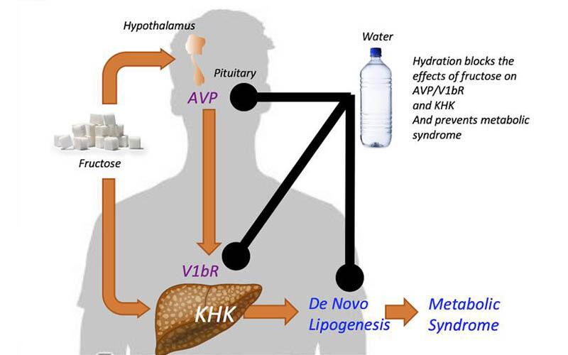 Похудеть можно с помощью простой воды