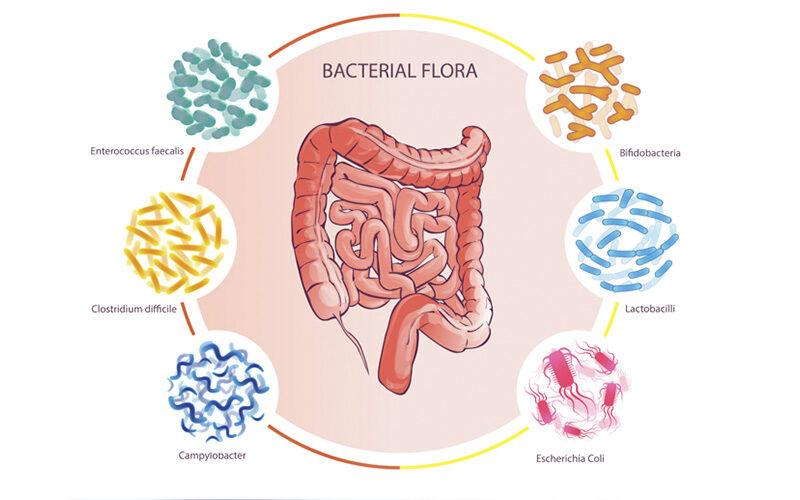 Бариатрическая хирургия положительно изменяет микробиоту кишечника